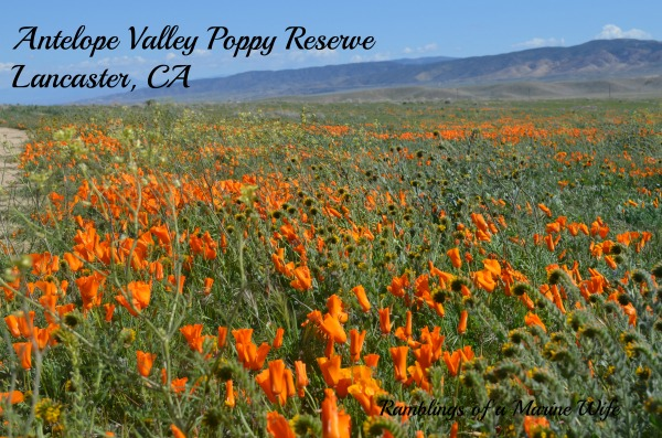 Antelope Valley Poppy Reserve Nothing But Room